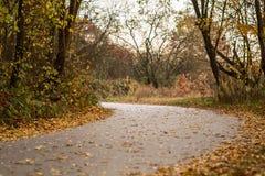 jesień zielonych drogowych słońca drzew pogodowy kolor żółty Fotografia Royalty Free