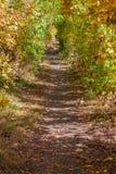 jesień zielonych drogowych słońca drzew pogodowy kolor żółty Obraz Stock