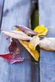 Jesień zimno i dżdżownicy kolory Obraz Royalty Free