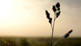 Jesień zimny ranek, mgła, wiatr i wschód słońca, zbiory