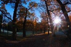 Jesień zmierzch tworzył w drewnach lokalizować w Petersburg Rosja zmierzchu króko przedtem Pavlovsk park Fotografia Stock