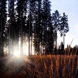 Jesień zmierzch w lesie z słońce promieniami Obrazy Stock