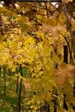 jesień Obrazy Royalty Free