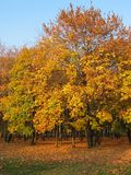 jesień Obraz Royalty Free