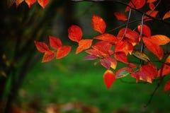 Jesień -20 Zdjęcia Stock
