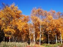 Jesień Zdjęcie Royalty Free