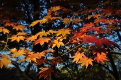 Jesień zdjęcia stock