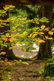Jesień Obraz Stock