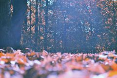 Jesień Obrazy Stock