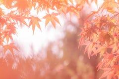 Jesień abstrakta tła Obrazy Royalty Free