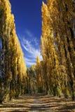 jesień alei drzewa Zdjęcie Royalty Free