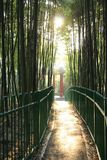 Jesień bambusa gaj zdjęcie royalty free