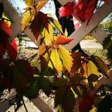 jesień bank colours niemieckiego Rhine rzeki drzewa kolor żółty Obraz Stock