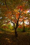 Jesień barwi -6 Obrazy Royalty Free
