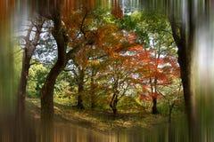 Jesień barwi -7 Zdjęcia Royalty Free
