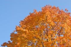 jesień barwi drzewa obraz royalty free