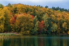 Jesień barwi drzewa i lasu w Lithunia Zalieji ezerai Krajobraz i natura Jezioro w przedpolu Obraz Royalty Free