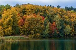 Jesień barwi drzewa i lasu w Lithunia Zalieji ezerai Krajobraz i natura Jezioro w przedpolu Zdjęcie Royalty Free