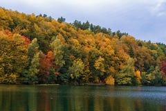 Jesień barwi drzewa i lasu w Lithunia Zalieji ezerai Krajobraz i natura Jezioro w przedpolu Obrazy Stock