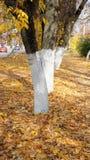 Jesień bulwar Obrazy Royalty Free