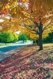 Jesień bulwar Obrazy Stock