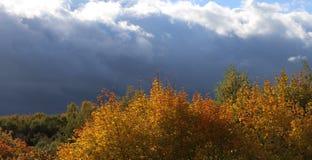 jesień chmurnieje drzewa Zdjęcia Royalty Free
