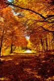 jesień ścieżka Fotografia Stock
