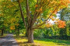 Jesień cienia drzewa Obrazy Stock