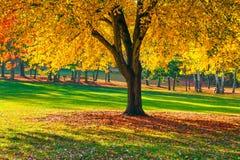 Jesień cienia drzewo Zdjęcie Royalty Free