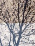 jesień cienie Fotografia Royalty Free