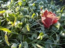 Jesień co rano  zdjęcie stock