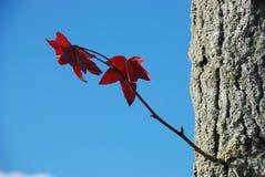 jesień colours drzewa Zdjęcia Stock