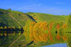 Jesień czas - Barwioni drzewa Odbija W wodzie Zdjęcia Stock