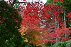 Jesień czerwonego koloru zmiana Japonia Obraz Royalty Free