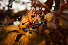 Jesień deszcz Zdjęcia Royalty Free