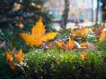 Jesień dni Zdjęcie Stock