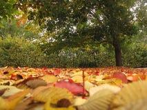 Jesień dni Obraz Royalty Free
