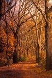 jesień dolina Obrazy Stock
