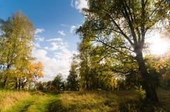 jesień drewna Fotografia Royalty Free