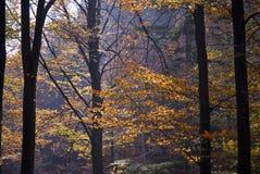 Jesień drewna obraz royalty free