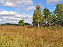 jesień drewno Fotografia Royalty Free