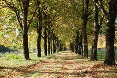 jesień droga Obraz Royalty Free