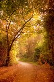 jesień droga przemian