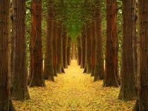 jesień droga przemian Obrazy Royalty Free