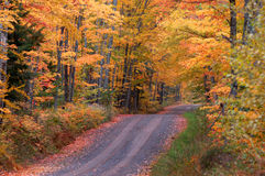 jesień drogi tunel Zdjęcie Stock