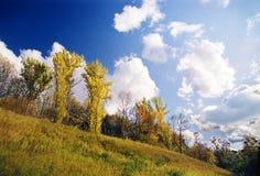 jesień drzewa Zdjęcie Stock