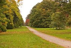 jesień drzewa Obrazy Stock