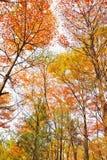 jesień drzewa Obraz Royalty Free