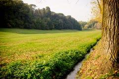 jesień drzewa Obrazy Royalty Free
