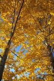 Jesień drzewa Obraz Stock